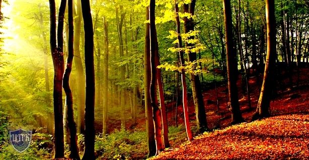 Правительство РФ подготовило Постановление об особенностях использования лесов