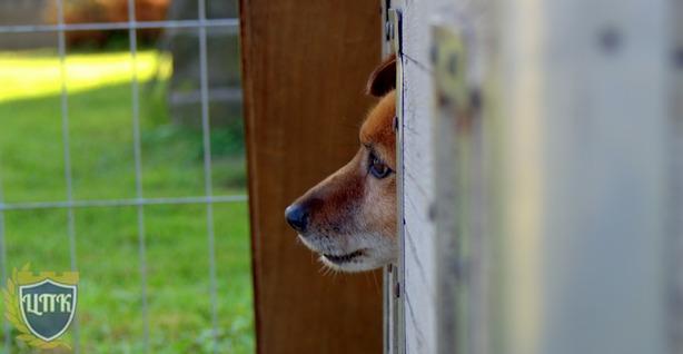 Вступит в силу закон об обязательной передаче безнадзорных животных в приюты