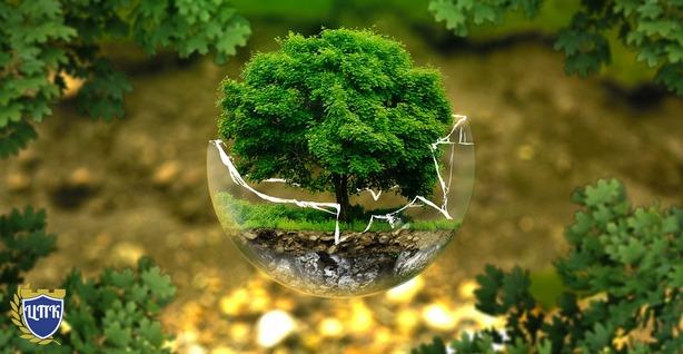 Защита природы — это залог здоровой жизни будущих поколений